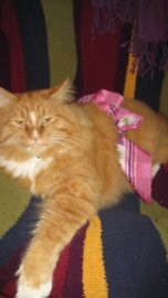 Cheeto tolerates all sorts of indignities ;-)