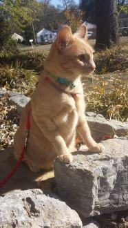 Adventure cat!