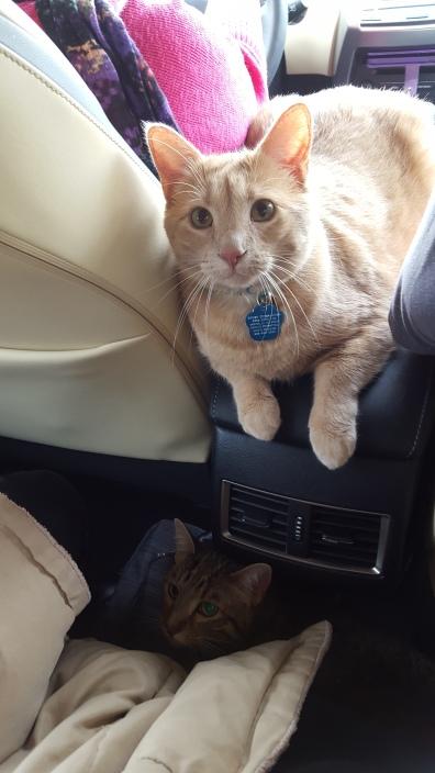 The boys, riding in Grandma's car, headed back home.