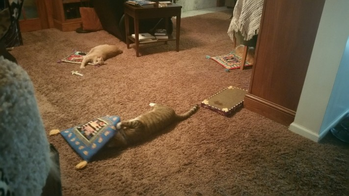 Dexter and Cosmo rolling around getting high on catnip in Grandma's library
