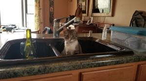 Not sure why but Manny kept finding himself IN the kitchen sink.