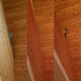 The cats loved exploring the loft in the cabin!