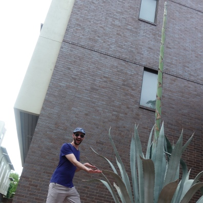 Giant agave plants!!!